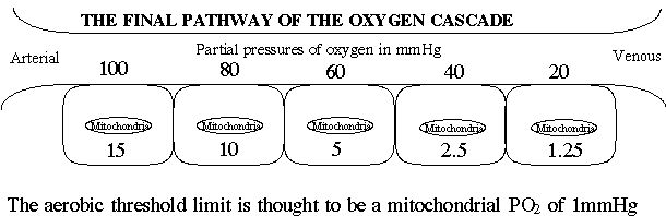 clotting pathway diagram. Clotting Pathway Diagram. A diagram of the oxygen; A diagram of the oxygen. Gugulino. Apr 12, 05:14 PM. What#39;s the UK time?